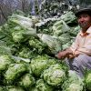 Portrait with Cabbage (thumbnail image)
