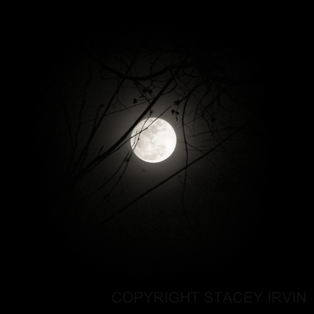 Full perigree moon on March 19, 2011 from Nashville, Tennessee.