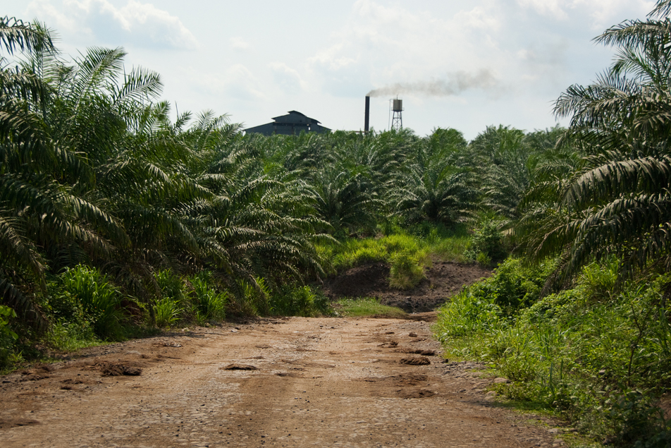 African palm oil is processed here for use as cooking oil and biofuel.