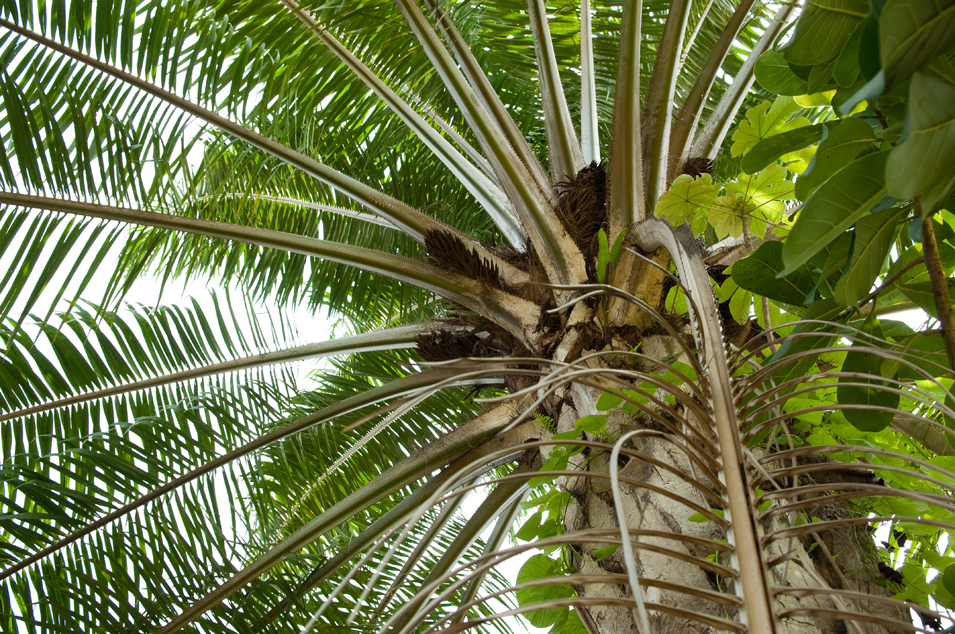 African Palm (detail)
